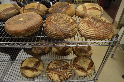 brood-lab-brood-racks